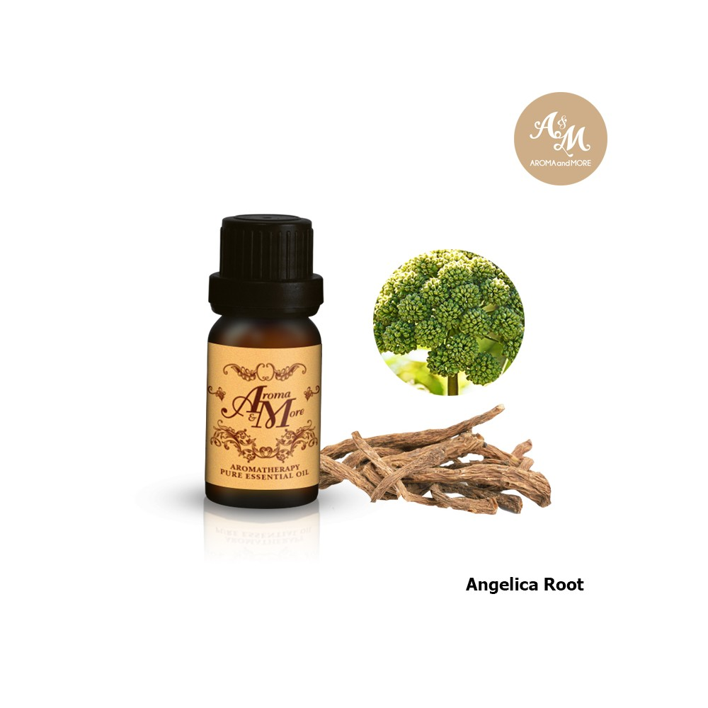 Angelica Root Essential Oil, India